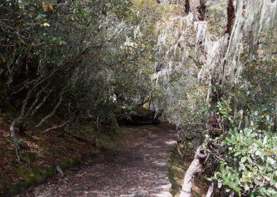 Tropisch durch den Flechtenwald